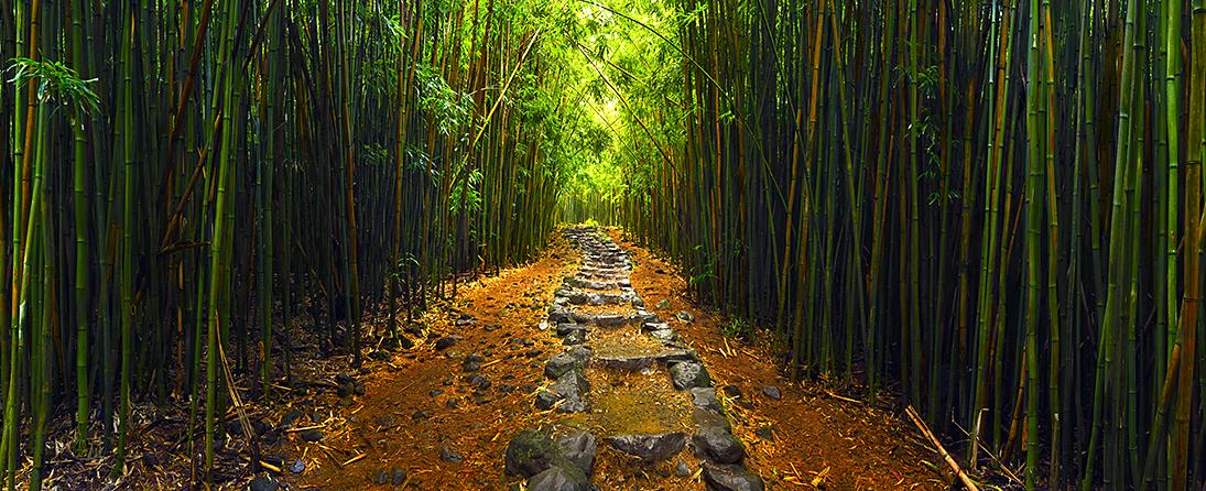 Cheyne Walls Sacred Path